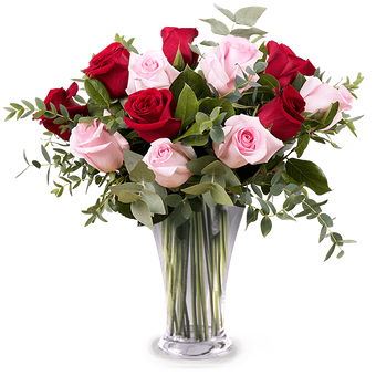 Love Actually: 12 Red and Pink Roses