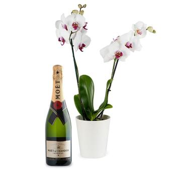 Orchidea e Champagne
