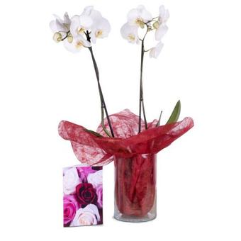 Raffinata sorpresa: Orchidea e Bigliettino