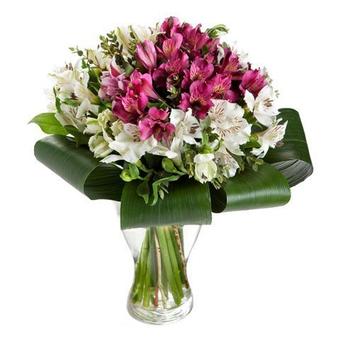 Elegancia: 20 alstroemerias blancas y rosas