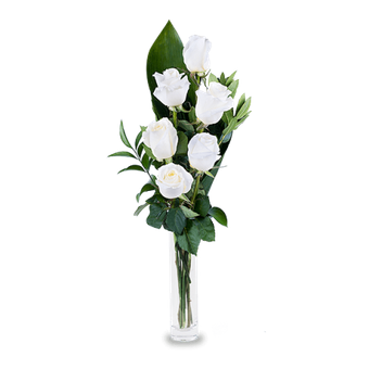 Bright Lights: 6 White Roses