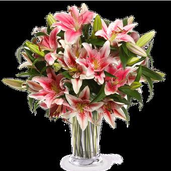 Rumieniec Wstydu: różowe lilie Stargazer