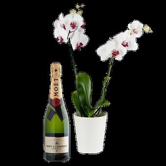 Bulles de Style : Orchidée Blanche
