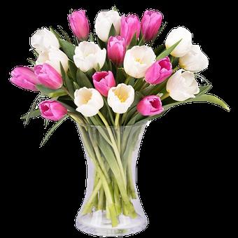 Aire de Primavera: Tulipanes Blancos y Rosas