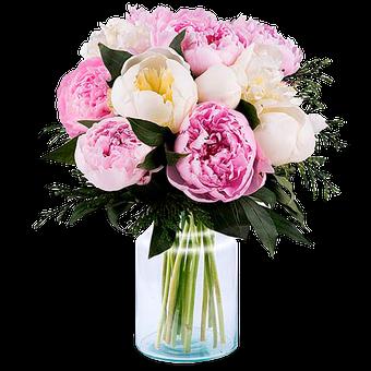 Grâce Délicate : Pivoines Roses et Blanches