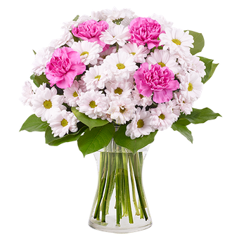 Abisko: crisantemi e garofani