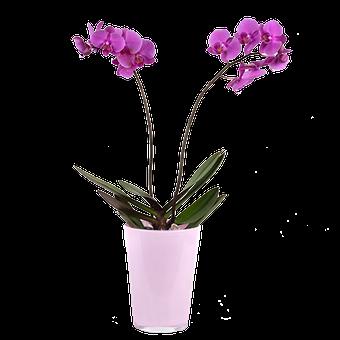 Touche de soie: Orchidée Violette