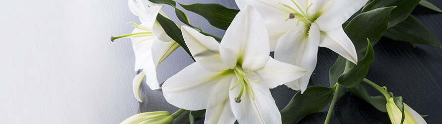 Kwiaciarnia internetowa FloraQueen - Kwiaty na pogrzeb z dostawą
