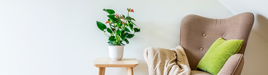 Voir toutes nos plantes