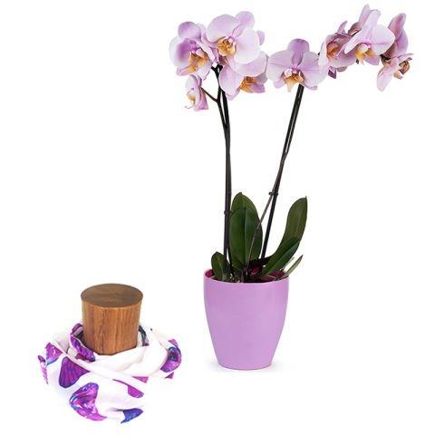 Summum de l'Amour: Orchidée et Foulard