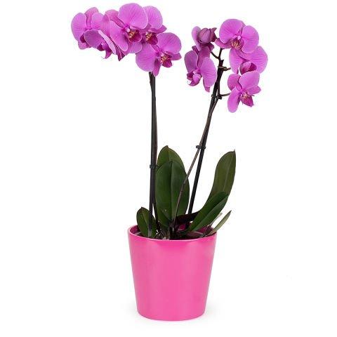 Duo chic: orchidea e profumo
