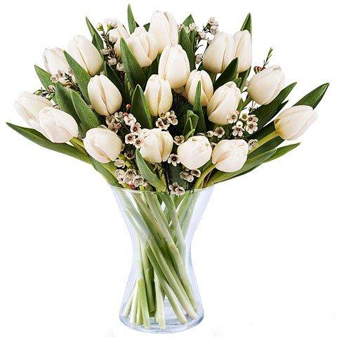 Serenità: 20 Tulipani Bianchi