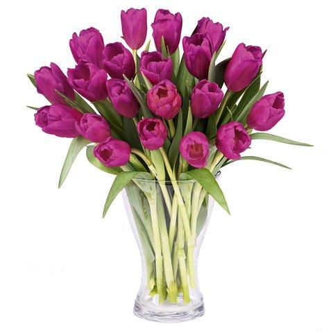 Fresh Inspiration: 20 Purple Tulips