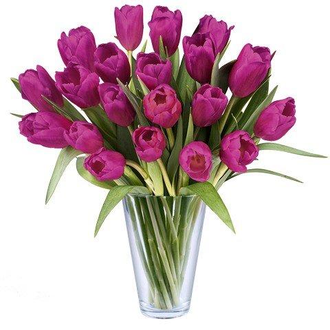 Fresca Ispirazione: 20 Tulipani lilla