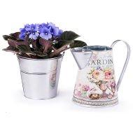 Jardin des Merveilles : Violette Bleue