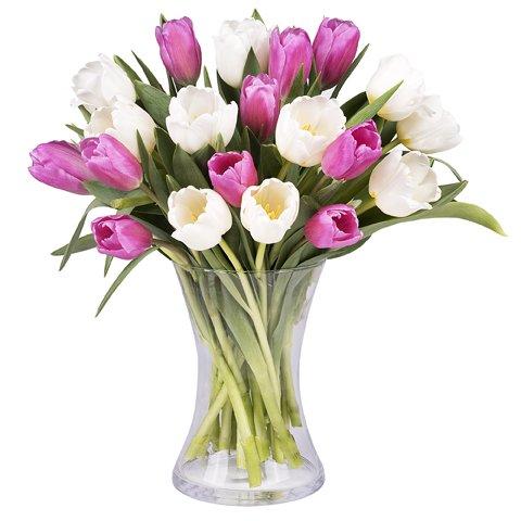 Sensazioni di Primavera: Tulipani Rosa e Bianchi