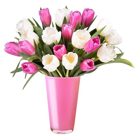 Spring Vibes: Pink and White Tulips