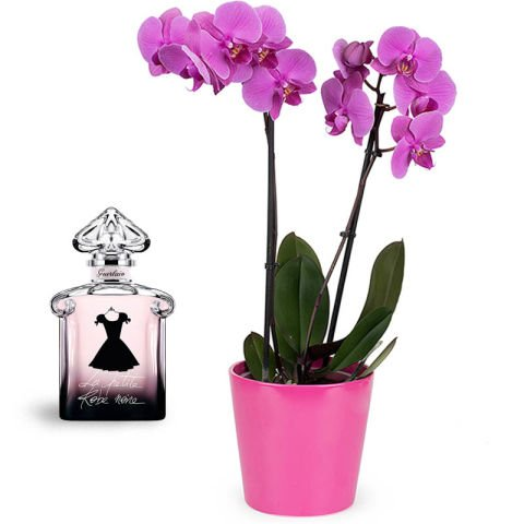 Duo chic: orchidea e profumo
