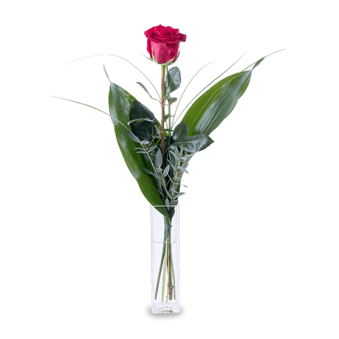 Strzała Amora: 1 czerwona Róża