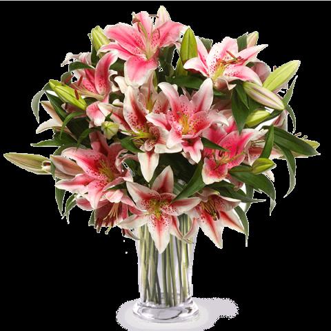 Beauté Orientale : Lys Stargazer Roses