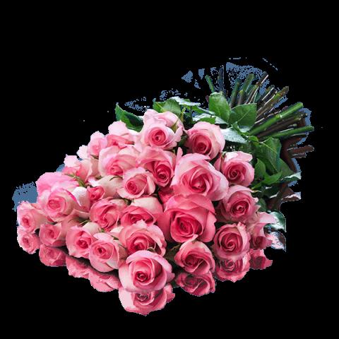 Pocałunek Marliyn: 25 różowych Róż
