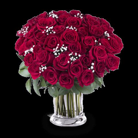 True Love: 45 Roses