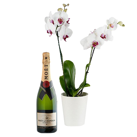 Classy Bubbles: White Orchid & Champagne