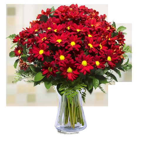 Balade Champêtre : Chrysanthèmes et Marguerites Rouges