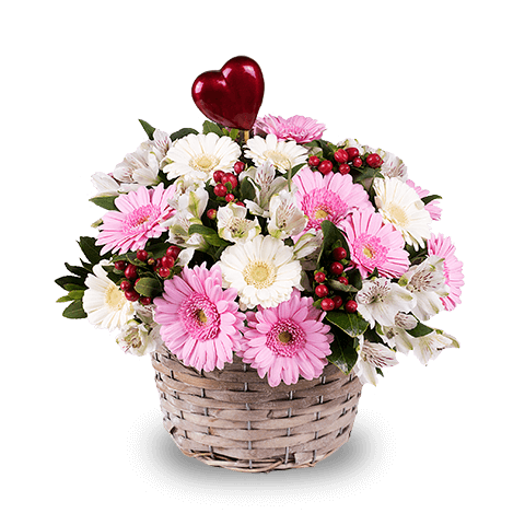 Pink and white gerberas gerbera flowers delivered floraqueen tender smile gerberas and alstroemeria mightylinksfo