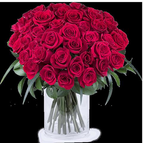 50 Nuances de Rouge : 50 Roses Rouges