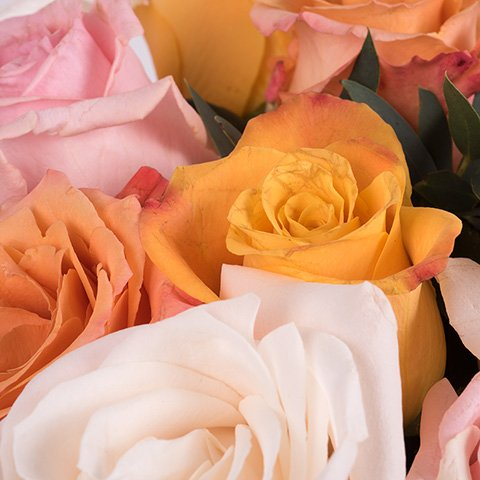 Couleur Ambre : Mix de Roses