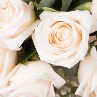Touch of Class: 12 White Roses