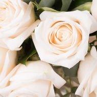 Touche de Classe : 12 Roses Blanches