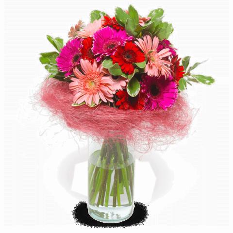 Blumen Wunderland: Gerbera