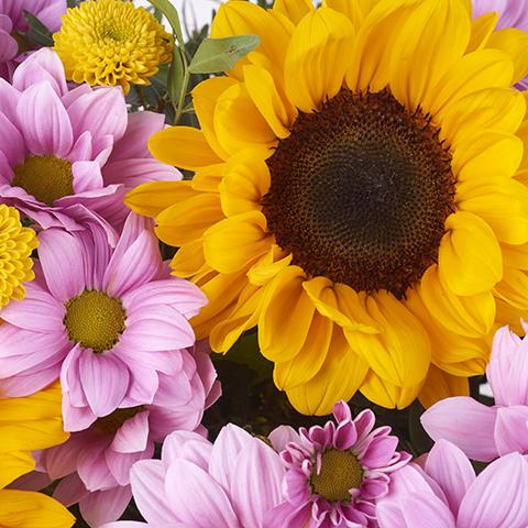 Atacama: Sunflowers & Pink Chrysanthemums