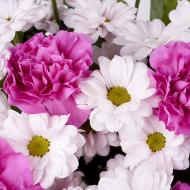 Abisko: Chrysanthèmes et Œillets