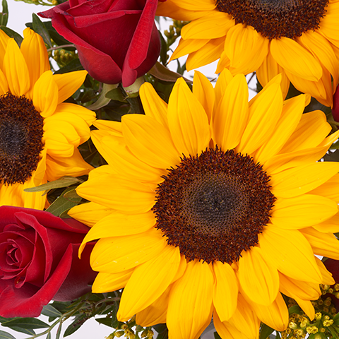 Tokio: Sonnenblumen und rote Rosen