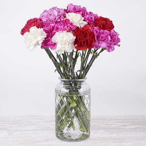 Verbena: Claveles rosas, blancos y rojos