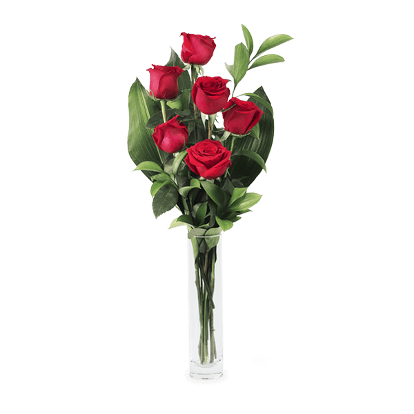 Love Hypnosis: 6 Red Roses
