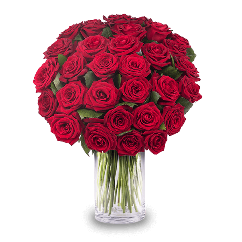 Drunk in Love: 30 Red Roses