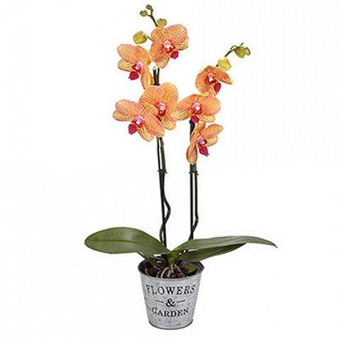 Exótica Orquídea Tigre