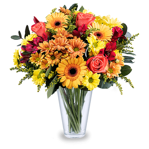 Mango: Orange Roses and Gerberas