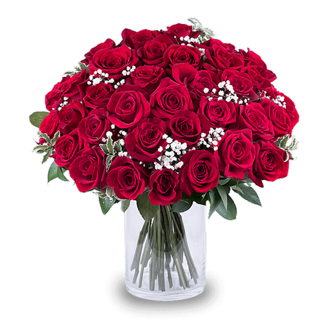 PS. I Love You: 35 Rosas Rojas