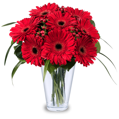 Lady Bugs: Red Gerberas