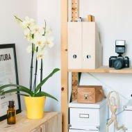 Słoneczna Elegancja: żółta orchidea