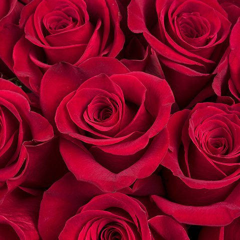 Grand Amour : 24 Roses Rouges