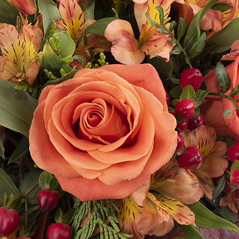 Potiron: Roses et Alstroemerias