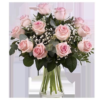 Secretos Rosas: 12 Rosas Rosas