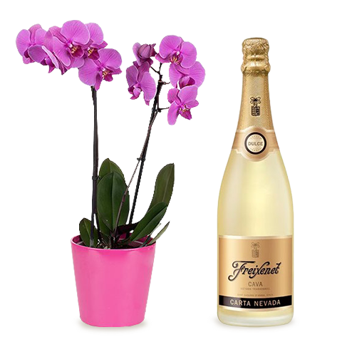 Festeggiamenti Premium: Orchidea e Cava