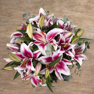 Oriental Beauty: Pink Stargazer Lilies